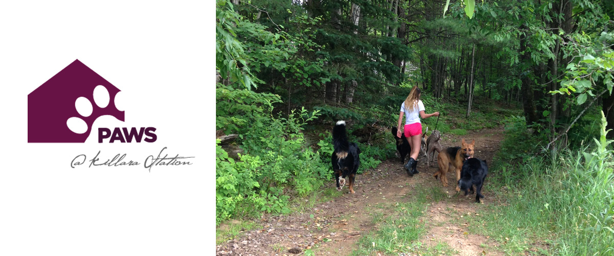 walking dogs at PAWS' dog boarding in haliburton