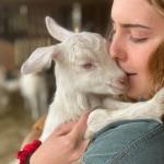 goat cuddling